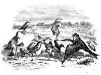 Ласточка и Птички