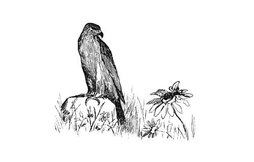 Орёл и пчела