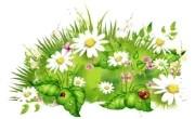 про цветы